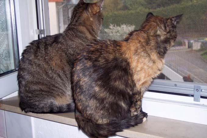 Der Sichere Balkon