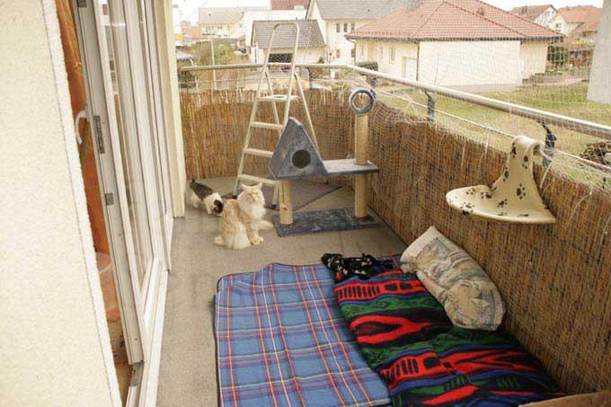... gute alternative zu einem richtigen katzen balkon nach oben zurück